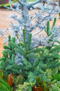 Silver Painted Bark & Evergreen Cuttings