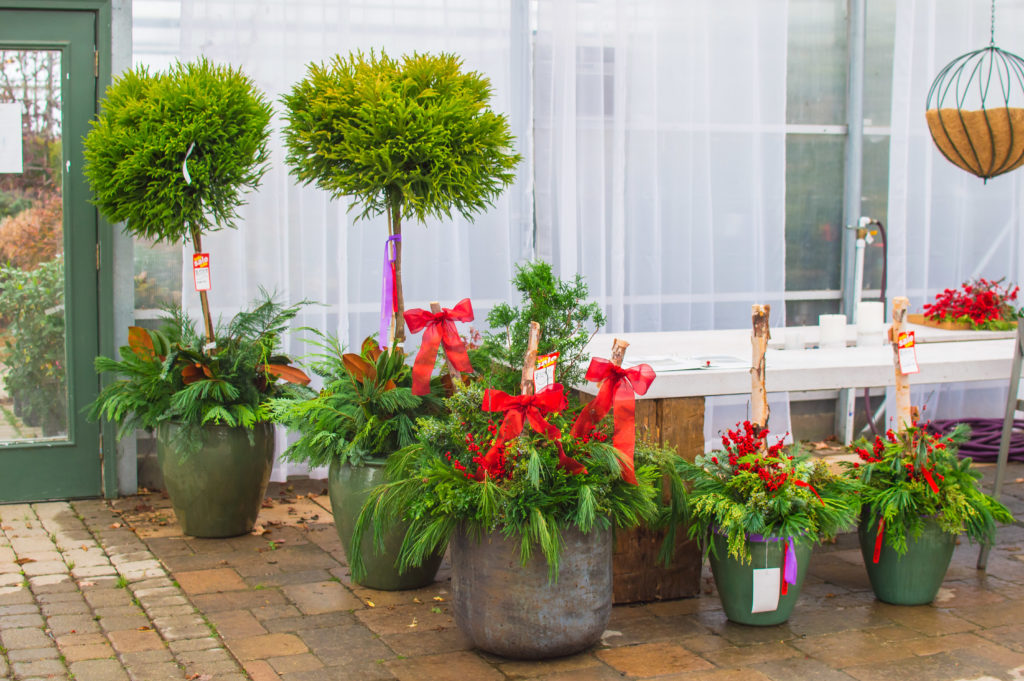 Winter and Christmas Planters with Live Evergreen Cuttings and Birch Branches